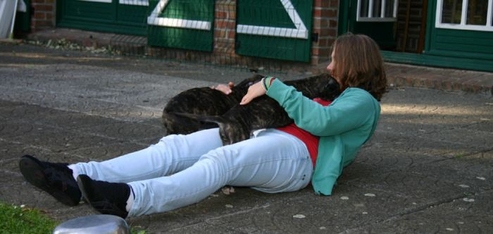 Attaque de deux petits Chiots, (Lévrier Greyhound)