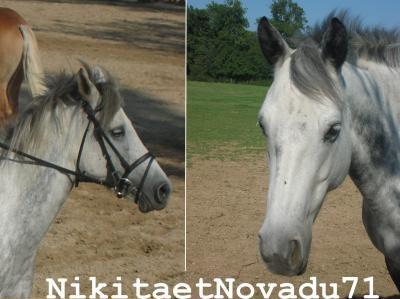 Nikita et Nova        On vous aimes