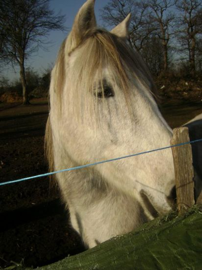 Poneyy D'amour (L)