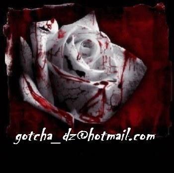 rose blanche en sang