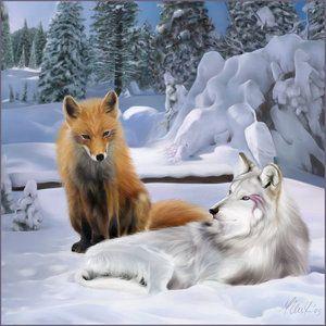 Loup & renard