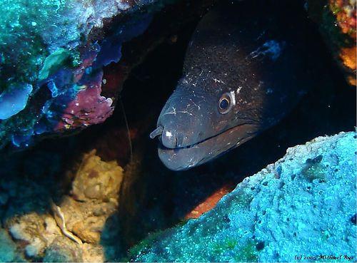 un gros serpent des mer