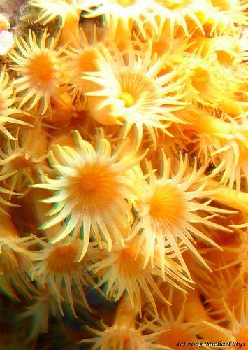 fleur des mer