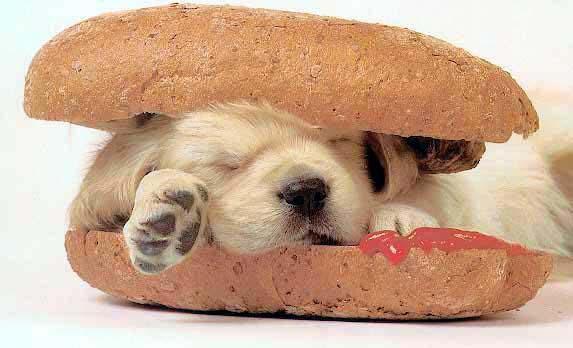 Hot-Dog. lol