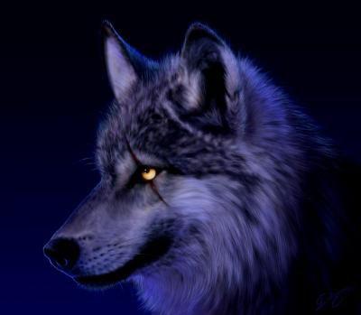 ses un loup!!!!!!!!!