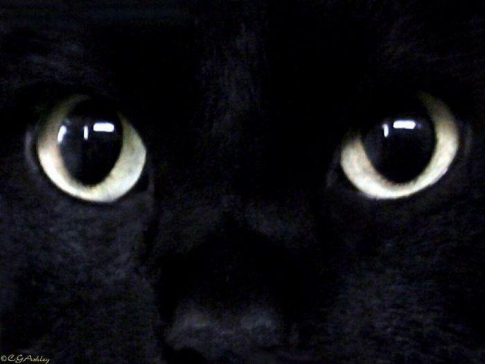 regarde moi dans les yeux!!!