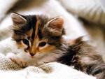 mon chat mon amoure a moi