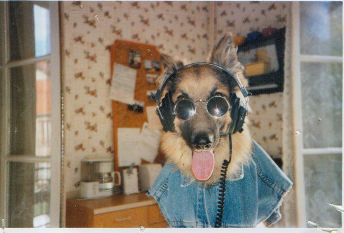 Le best chien dma vie