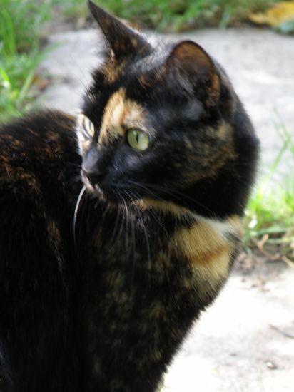 Abbi - chatte - 3 ans