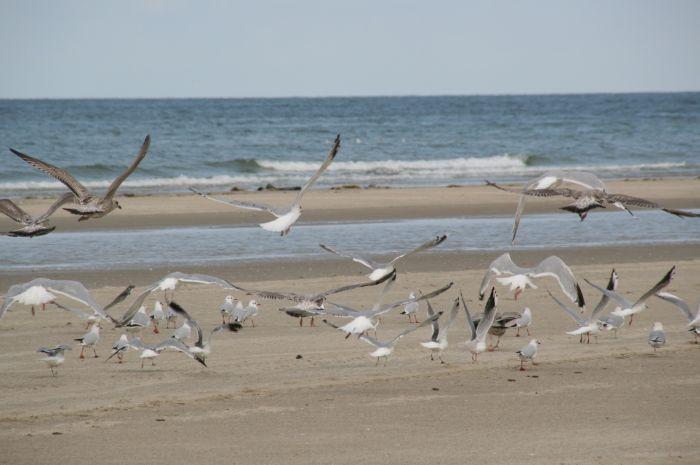 mouettes sur la plage