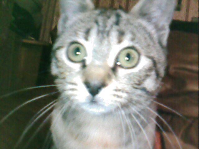 mon chat cassie