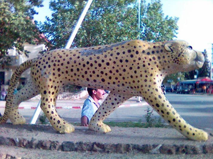 le tigre de imouzane