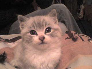 c'est la premiere photo que jai faite d'elle. 2janvier 2008