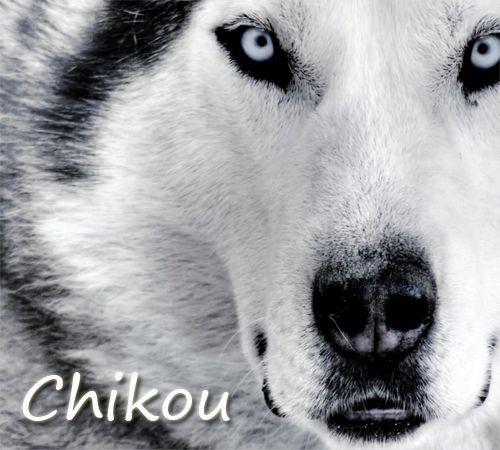 chikou