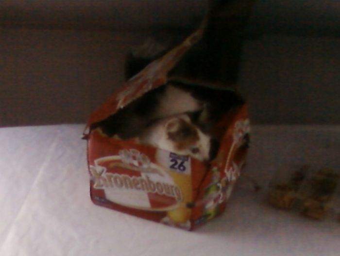 mon chat xD