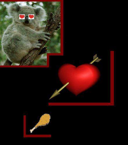 koala's love