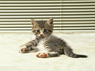 sw££T CAT
