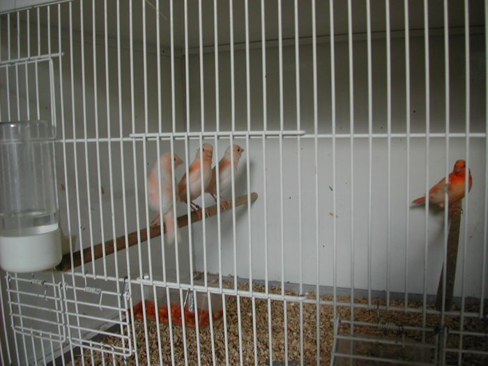 Ivoire rouge 2007