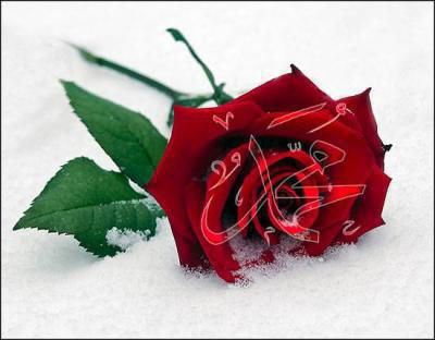 rose x3