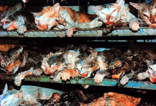 la vivisection est une découpe dans un corps vivant,
