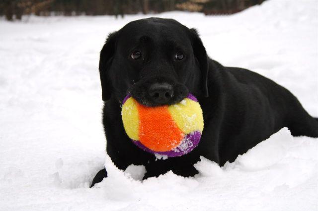 Saluut !       (sa c'est mon chien !!)