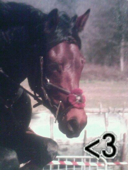 newton mon notre cheval<333333