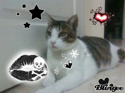 mon chat c mimi