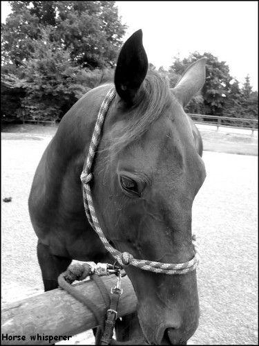 19.4, un ptit cheval auquel je m'étais attaché... <3