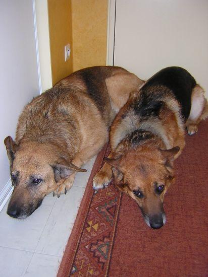 Mes chiens parties au ciel