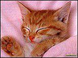 dure dure la vie de chat !
