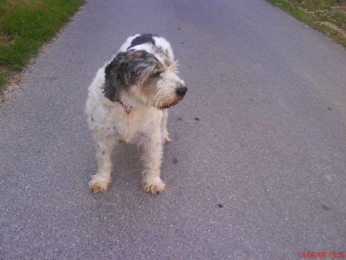 Nina ma chienne