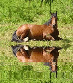 ma passion c les chevaux et rien d'autre trop belle passion!