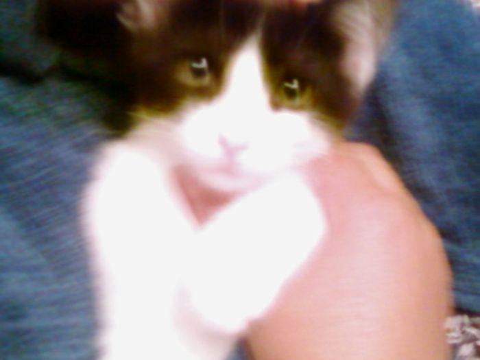 c'est mon chat mimine