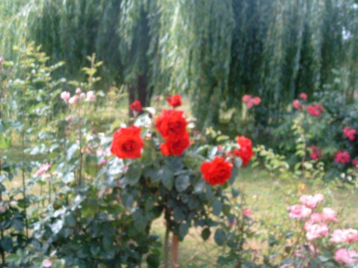 des fleurs et des oiseaux un vrai paradis !!!!