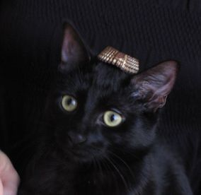 Belen, mon chat