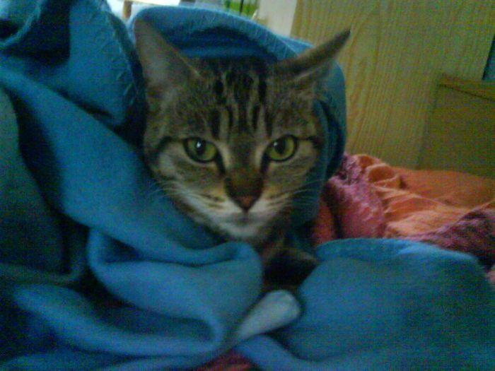 mon chat josephine