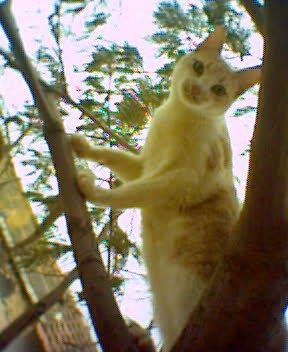 ce lui la c mon chat c vrémant un chat clochart...mdr