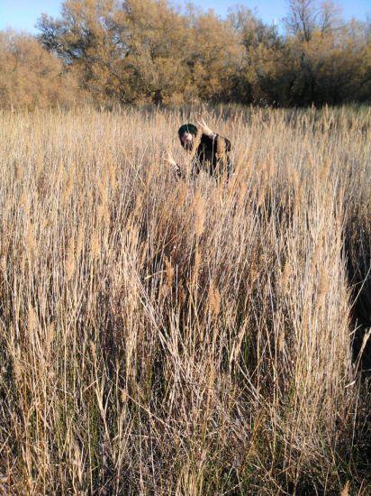 Les champ des blé