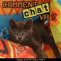 mi chat