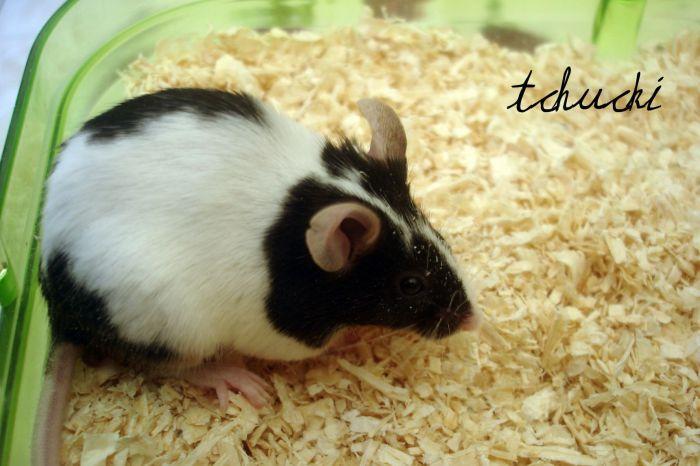 Tchucki ma petite souris (a). 1