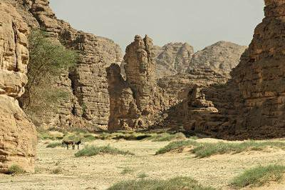 sahra algerienne