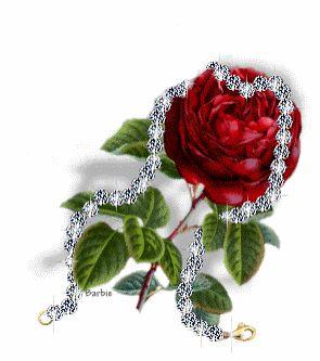 schune rose