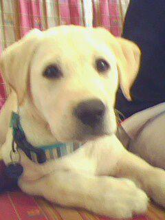 mon bb chien
