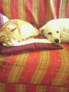 mon chat et mon chien mes 2 bebe