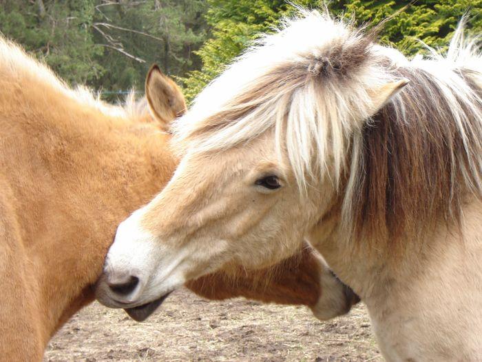 Doudou and Feline, My horses =)