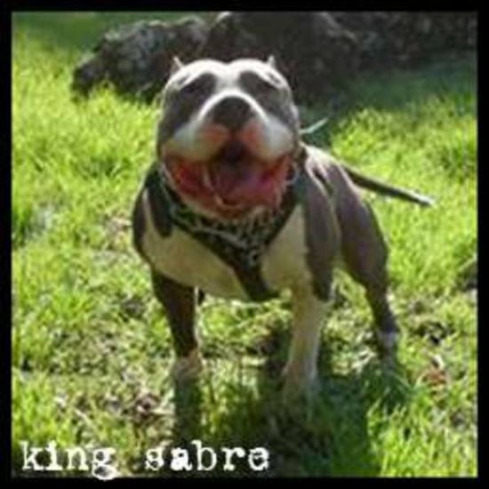 King Sabre... Papa 2 KURUPT et Grand pere de Faro.
