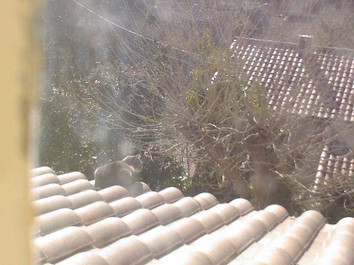 Ma Chipie sur le toit
