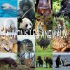 Profil de sos-animaux100