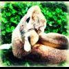 Profil de x-my-passion-cheval-x