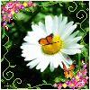 Profil de laughing-flower
